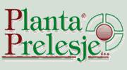 planta-prelesje